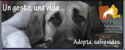 Mejor pagina para adoptar perros en España
