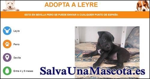 Paginas adopcion de perros
