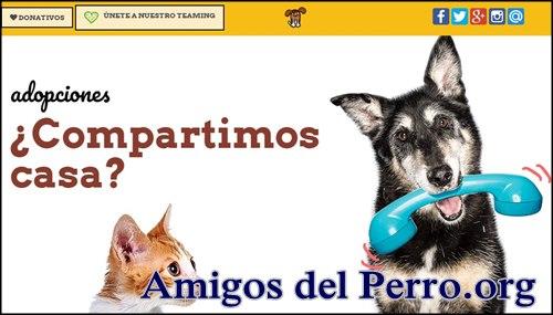 Adoptar perro en Espana con amigosdelperro