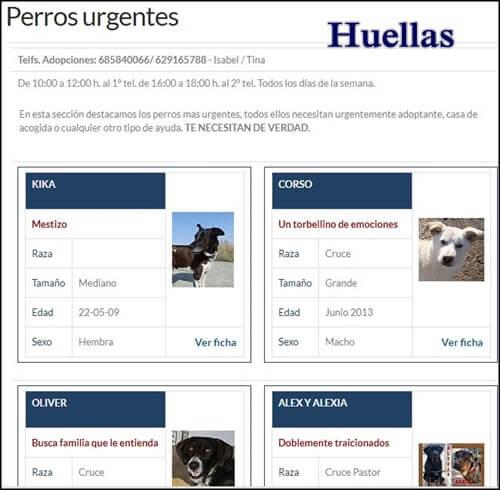 Adoptar mascota en España con huellas