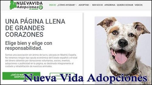 Mejores paginas adoptar perros en España