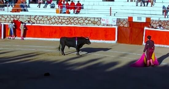 como ver toros online en directo