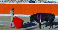 ver corridas de toros online